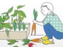 échantillons gratuits de graines de haricots verts