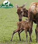 Gagnez des entrées pour le Parc Animalier de Sainte-Croix
