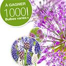 bulbes de fleurs gratuits