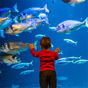 l aquarium de entr 233 es adultes gratuites pour ses 10 ans