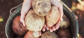 Falling Fruit : Nourriture gratuite partout dans le monde