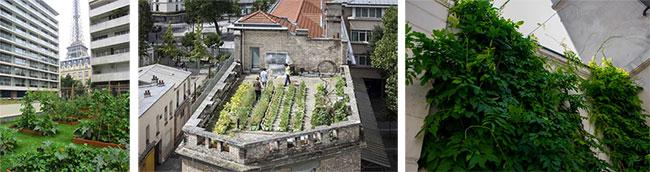 Végétalisation à Paris : Des graines à tous les étages