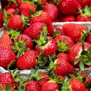 Chapeau de Paille : future maman = fraises gratuites