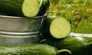 Hendrick's : Kit gratuit pour cultiver vos concombres !