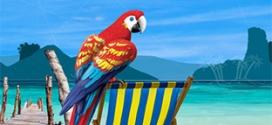 Promo Leclerc : Pack de 24 canettes de Tropico à 7,49€