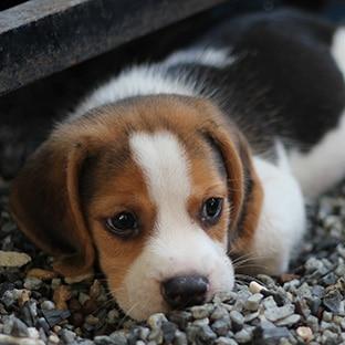 La journée du chiot : Sac Royal Canin gratuit rempli de cadeaux