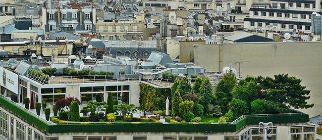 Obtenez gratuitement jusqu'à 5 arbres offerts par la mairie de Paris