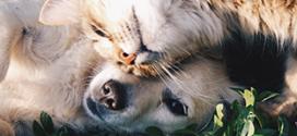 Test gratuit d'alimentation True Instinct pour chients et chats