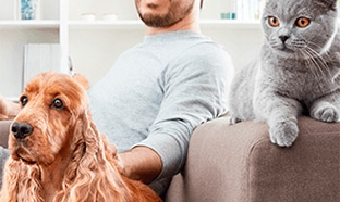 Test Advance : 8000 packs d'aliments pour chat ou chien gratuits