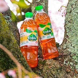 Test Sampleo : boissons Volvic Thé Vert gratuites
