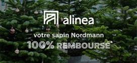 Alinea : Sapin 100% remboursé en bon d'achat