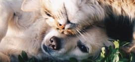 Test gratuit d'alimentation True Instinct pour chients et chats Nature's Variety