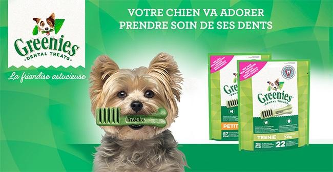testez les sticks dentaires pour chiens Greenies
