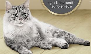 Coussin chat gratuit avec vos achat de croquettes Purina One